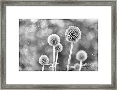 Plants In The Rain Framed Print by Natalie Kinnear