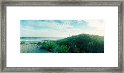 Plants On The Beach, Fort Tilden Beach Framed Print by Panoramic Images