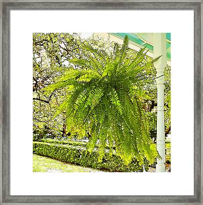 Plants-showy Southern Fern - Luther Fine Art Framed Print by Luther Fine Art
