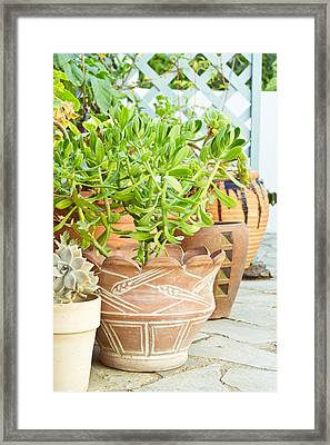 Plants Framed Print