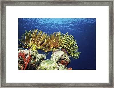 Plants Undersea, Okinawa Prefecture Framed Print