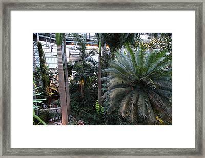 Plants - Us Botanic Garden - 011311 Framed Print by DC Photographer