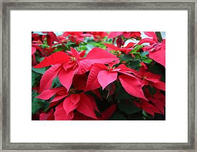 Plants - Us Botanic Garden - 01138 Framed Print