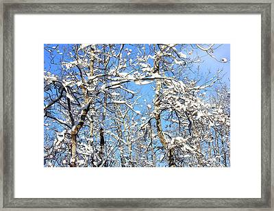Plastered Framed Print by Jim Sauchyn