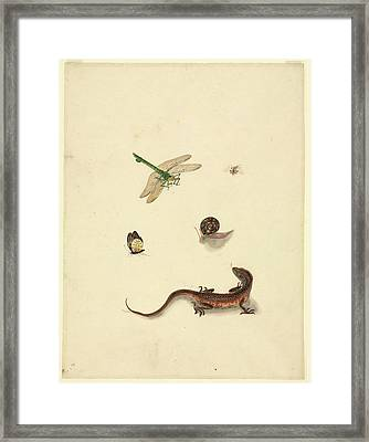 Plate 101 Framed Print by Natural History Museum, London