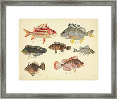 Plate 110: John Reeves Collection Framed Print by Natural History Museum, London