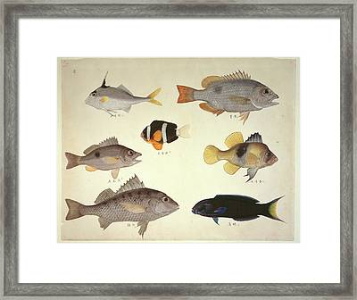 Plate 114: John Reeves Collection Framed Print by Natural History Museum, London