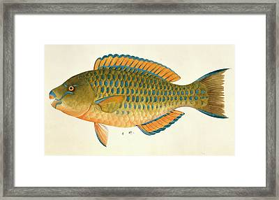 Plate 127: John Reeves Collection Framed Print by Natural History Museum, London