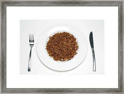 Plate Of Mealworm Framed Print by Victor De Schwanberg