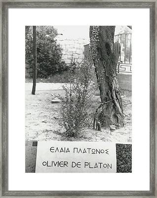 Plato�s Tree Framed Print by Retro Images Archive