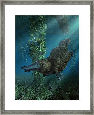 Platypus Framed Print by Daniel Eskridge