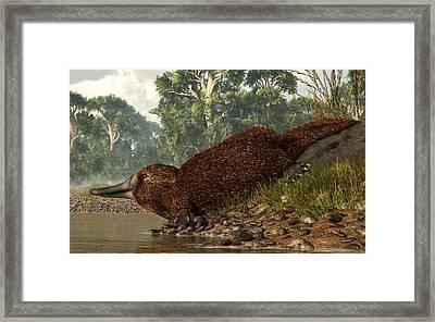 Platypus On The Shore Framed Print by Daniel Eskridge