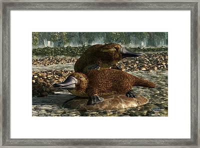 Platypuses Framed Print by Daniel Eskridge