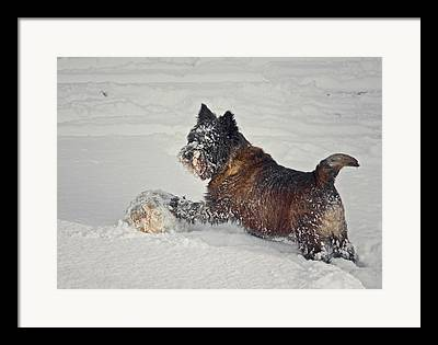 Cold Play Framed Prints