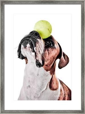 Play Ball With Me Framed Print by Jt PhotoDesign