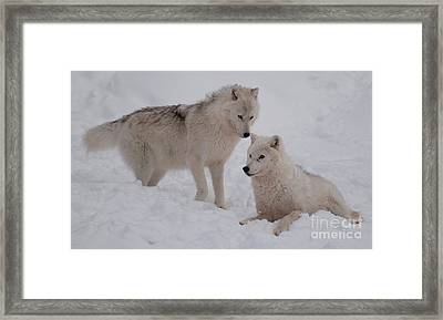 Framed Print featuring the photograph Play Time by Bianca Nadeau