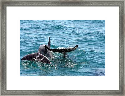 Play Time Framed Print by Debra Forand