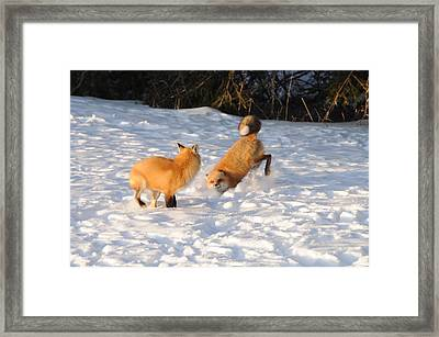 Play Time Framed Print by Sandra Updyke