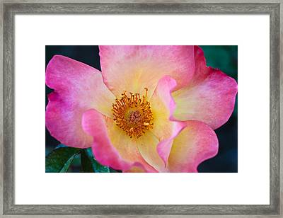 Framed Print featuring the photograph Playboy by Julie Andel