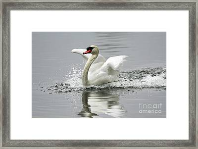 Playful At The Lake Framed Print by Inspired Nature Photography Fine Art Photography