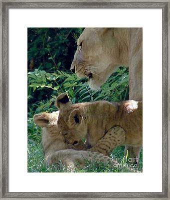 Playful Cubs Framed Print