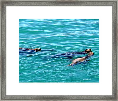 Playful Framed Print by Dick Botkin