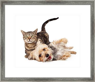 Playful Dog And Cat Laying Together Framed Print