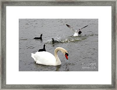 Playful Fun On The Lake Framed Print by Kathy  White
