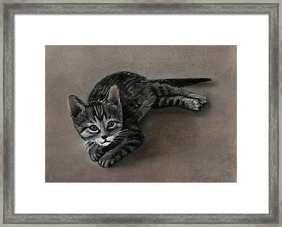 Playful Kitten Framed Print by Anastasiya Malakhova