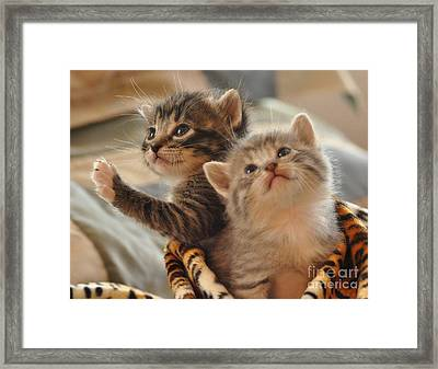 Playful Kittens Framed Print