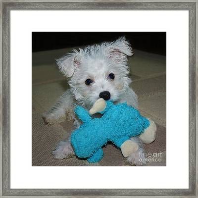 Playful Puppy Framed Print by Terri Waters