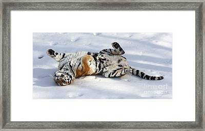 Playful Tiger Framed Print