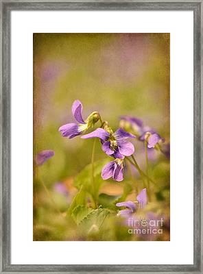 Playful Wild Violets Framed Print by Lois Bryan