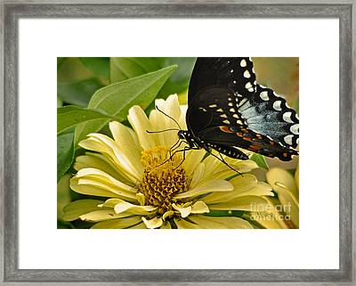 Playing Among The Zinnias Framed Print by Nava Thompson