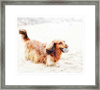 Playing Fetch With Sophie  Framed Print