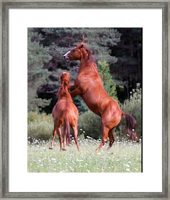 Playing Free Framed Print by Rhonda Humphreys