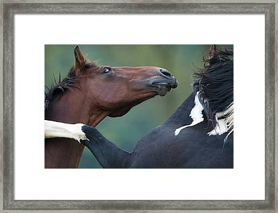 Playing Horses Framed Print by Andy-Kim Moeller