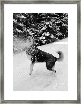 Playing In The Snow Framed Print by Carol Groenen