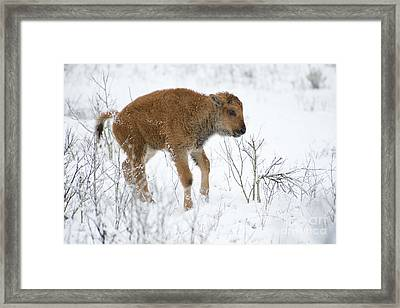 Playing In The Snow Framed Print