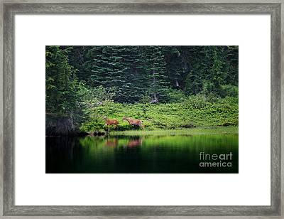 Playing In The Wild Framed Print
