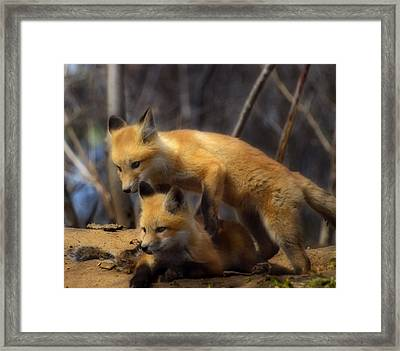 Playing Kit Foxes Framed Print