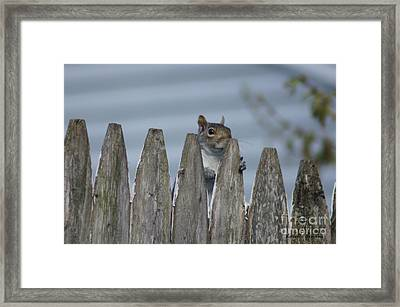 Playing Peek-a-boo Framed Print by Lorelle Gromus