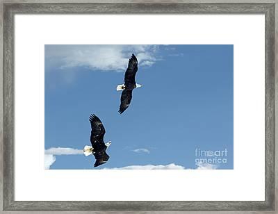 Playing Tag Framed Print by Bob Hislop
