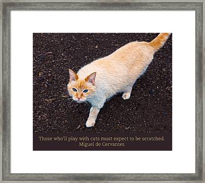 Playing With Cats Framed Print by Omaste Witkowski