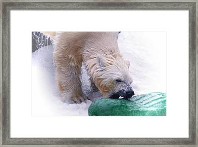 Playing With My Pickle Framed Print by Kathleen Struckle
