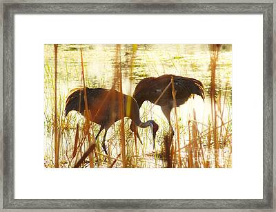 Playtime 2 Framed Print by Lynda Dawson-Youngclaus
