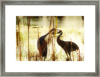 Playtime Framed Print by Lynda Dawson-Youngclaus