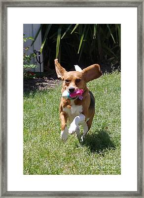 Playtime Framed Print by Tannis  Baldwin