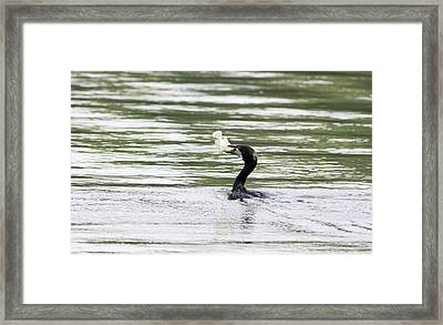 Pleading - Let Me Go... Framed Print