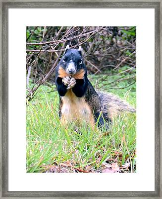 Please Sir Framed Print by Julie Cameron